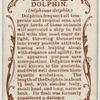 Dolphin (Delphinus delphis).