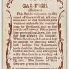 Gar-fish (Belone).