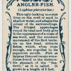Angler-fish (Lophius piscatorius).