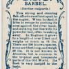 Barbel (Barbus vulgaris).