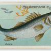 Bass (Labrax lupus).