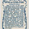 Opah or king-fish (Lampris luna).