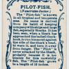 Pilot-fish (Naucrates ductor).