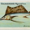 Sword-fish (Histiophorus pulchellus).