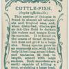 Cuttle-fish (Sepia officinalis).