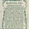 Electric eel (Gymnotus electricus).