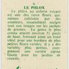 Le phlox.
