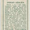 Indian azalea.