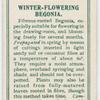 Winter-flowering begonia.