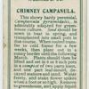 Chimney Campanula.