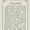 Cyclamen.