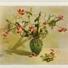 [Lilium speciosum.]