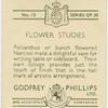 [Polyanthus or bunch flowered narcissi.]