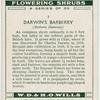 Darwin's barberry (Berberis Darwinii).