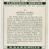 Witch hazel (Hamamelis arborea).