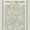 Crab, or wild apple (Pyrus malus).