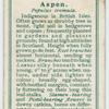 Aspen (Populus tremula).
