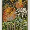 Dogwood, or cornel (Cernus sanguinea).