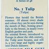 Tulip (Tulipa).