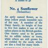 Sunflower (Helianthus).