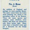 Rose (Rosa).