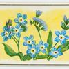 Forget-me-not (Myosotis).