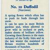 Daffodil (Narcissus).