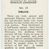 Phlox.