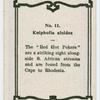 Kniphofia aloides.