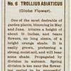 Trollius asiaticus (Globe flower).