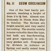 Ceum coccineum.