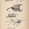 Insectes de Lessouto (scarabee, mante, scorpion, sauterelles).