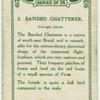 Banded chatterer (Cotinga cincta).
