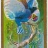 Prince Rudolph's bird-of-paradise (Paradisoruis rudolphi).