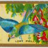 Lort phillips roller (Coracias lorti).