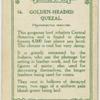 Golden-headed quezal (Pharomacrus moccino).