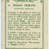 Indian tree-pie (Dendrocitta vagabunda).