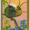 Hunstein's bird-of-paradise (Diphyllodes hunsteini).