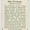 Blue grosbeak (Guiraca cærulea).