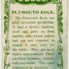 Plymouth Rock.