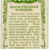 Silver-pencilled hamburgh.
