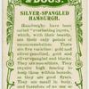 Silver-spangled hamburgh.