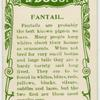Fantail.