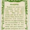 Magpie.