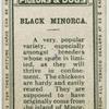 Black Minorca.