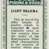 Light Brahma.