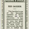 Red jacobin.