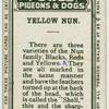 Yellow nun.