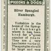 Silver spangled Hamburgh.