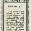 Red Malay.